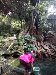 Seorang wanita sedang mengambil air di Sendang Kauripan, yang berlokasi di Desa Gondorio, Kelurahan Wates Ngaliyan Semarang Barat