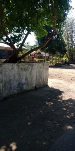 Punden, yakni tempat penghormatan atas leluhur yang sudah meninggal di Desa Mantingan Tengah. Sumber: Dokumentasi Lpm Invest